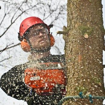 Tømmerhugger